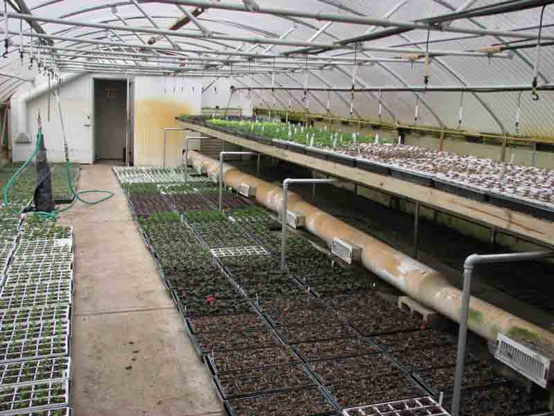 Flower flats in production inside the park greenhouses