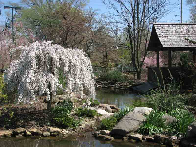 Spring time in the Japanese Garden